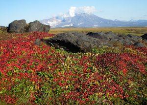 Ziemia Szaleńców - Tundra
